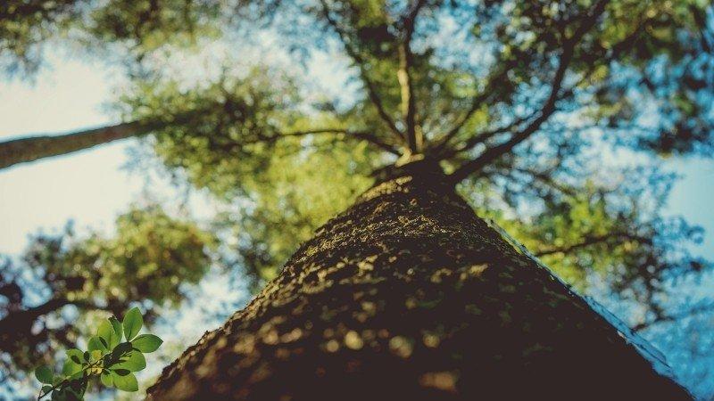 Drzewa w obyczajowości Słowian 1