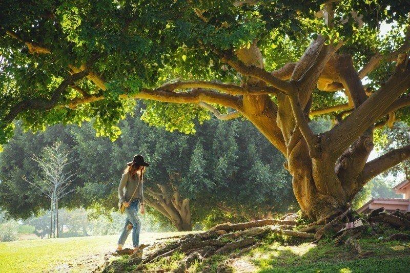 Drzewa w obyczajowości Słowian » Ariowie