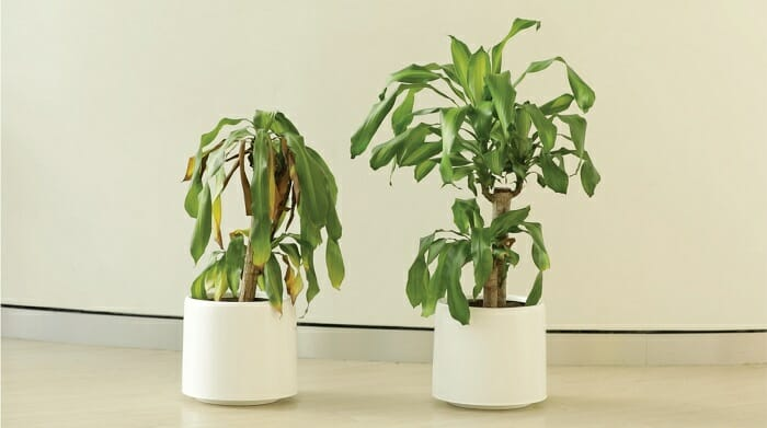 Czy rośliny odbierają nasze myśli? 1