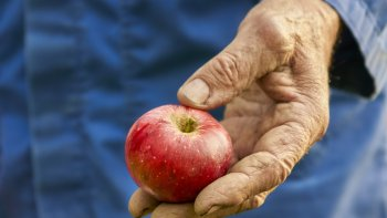 Chłopiec i drzewo jabłoni